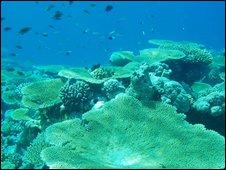 Chagos underwater