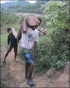 Bangladeshi woodcutters