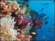 A coral reef in Indonesia (BBC)