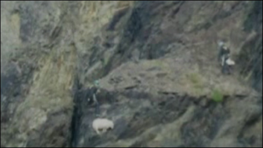Stranded sheep rescued by RSPCA inspectors in Pembrokeshire quarry pit