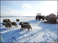 A farmer feeds his sheep