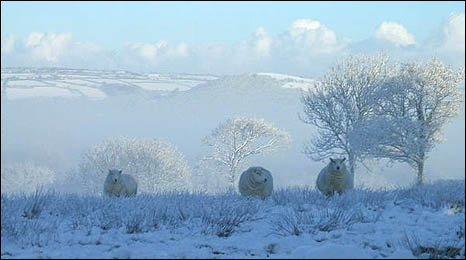 Image of three sheep in a white landscape in Carmarthenshire by Jill Gregory