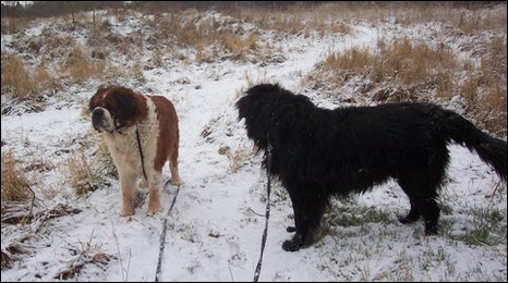 Places To Walk Dogs In Lincolnshire