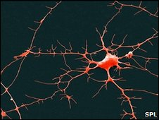 Neuron (SPL)