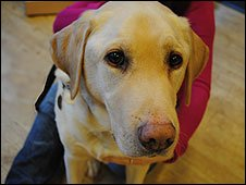 Guide Dogs Training Centre Atherton