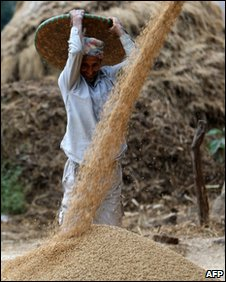 Nepalese farmers winnow rice in Pyutar village on the outskirts of Kathmandu