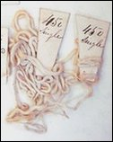Cotton threads, possibly from Samuel Crompton's spinning mule