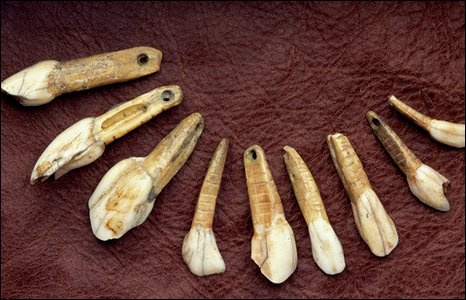 Beads made from animal teeth