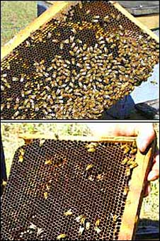 Beehive before and after CCD