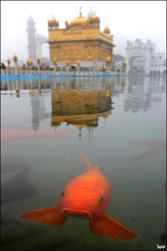A fish swims near the Golden Temple in Amritsar, India