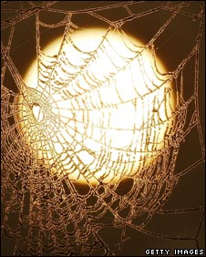 Frosted spider web seen against the Sun