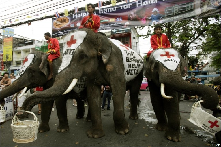 The Red Cross uses elephants in Bangkok, Thailand, to ask for donations for the victims of the Haiti earthquake.