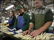 Polish workers sorting asparagus in Germany (file pic)