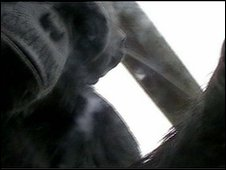 Chimpazee looking into Chimpcam