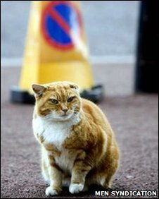 Olly Manchester Airport's resident cat