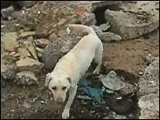 Search dog Echo helped in the Haiti rescue