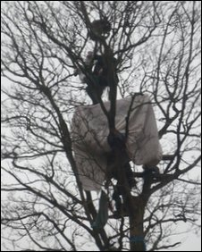 Protester in tree at Mainshill Wood Solidarity Camp
