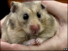 A hamster (Image: PA)