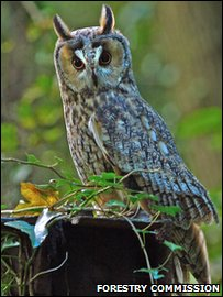 Surveys are conducted on the long eared owl