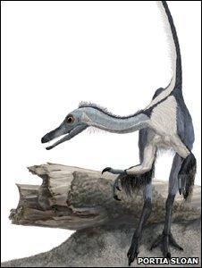 Haplocheirus sollers