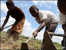 Children hoe corn on a farm near Harare, file image