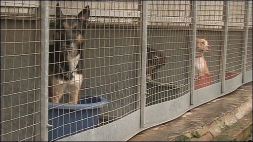 Dog Rescue Nottingham Derbyshire