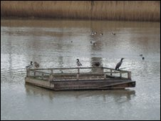 Birds use the Tern rafts for nesting