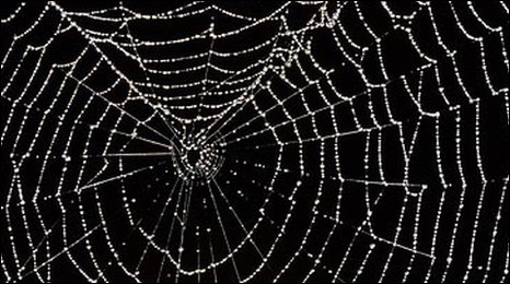 Spider web covered in water droplets (SPL)