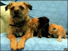 Dog and three kittens