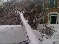 Tree in the snow fallen over car and house