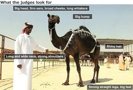Judge with camel