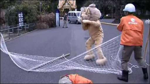 A zoo worker tries to catch a person dressed in a tiger suit