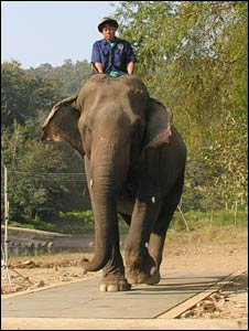 Elephant (Joakim Genin)