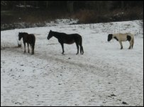 Horses abandoned without food in Colchester