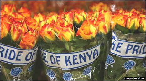 Roses from Kenya wrapped and on sale