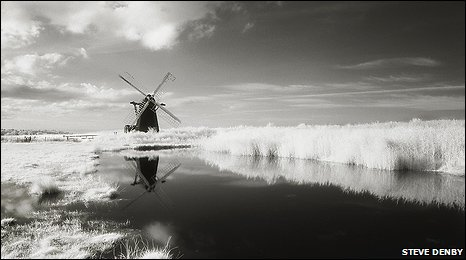 Black and white norfolk