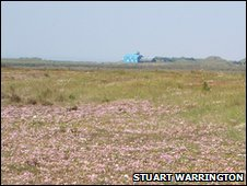 Blakeney Point flora (detail) (Photo: Stuart Warrington)