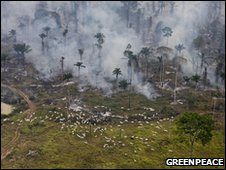 Burning of Amazon rainforest (Greenpeace)