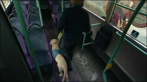 One of the trainee guide dogs on a bus