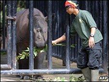 Sumatra rhino in South Sumatra (file image)