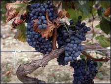 French grapes, generic