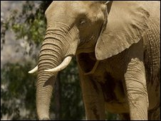 Elephant (BBC)