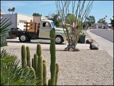 Cactus in Sun City