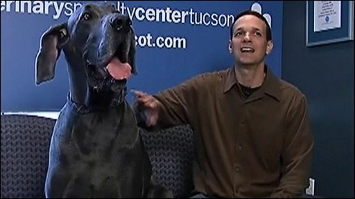 'Giant George' with owner David Nasser
