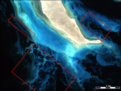 Red Sea reefs (NCRI)
