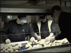 Migrant workers working in a potato factory