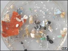 Petri dish (SEA)
