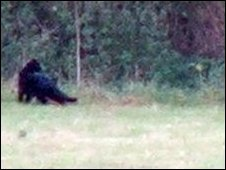 Big Black Cat Sightings Hampshire