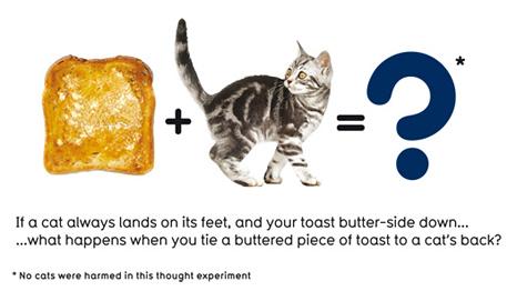 Toast and cat (BBC)