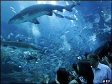 Sharks in the Dubai Mall aquarium